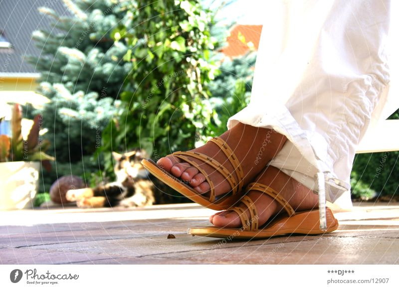 Cat Green Plant Relaxation Feet Footwear Tile Pants Toes