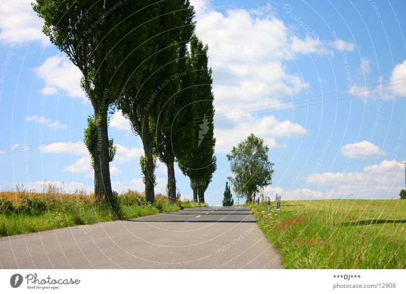 The road to nowhere! Tree Field Meadow Tar Clouds Summer Driving Europe Street Sky Sun Trip