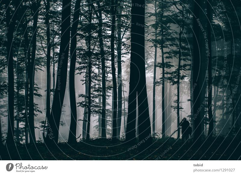 Jo in the wood 1 Human being Nature Landscape Plant Bad weather Fog Tree Forest Observe Dark Small Loneliness Freedom Idyll Far-off places Photographer