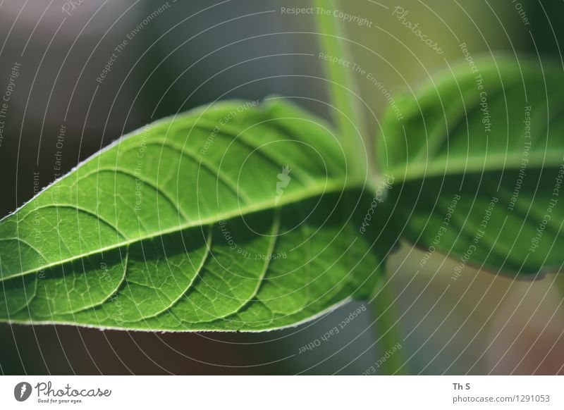 Nature Plant Green Beautiful Summer Leaf Calm Spring Natural Elegant Authentic Esthetic Blossoming Simple Uniqueness Serene