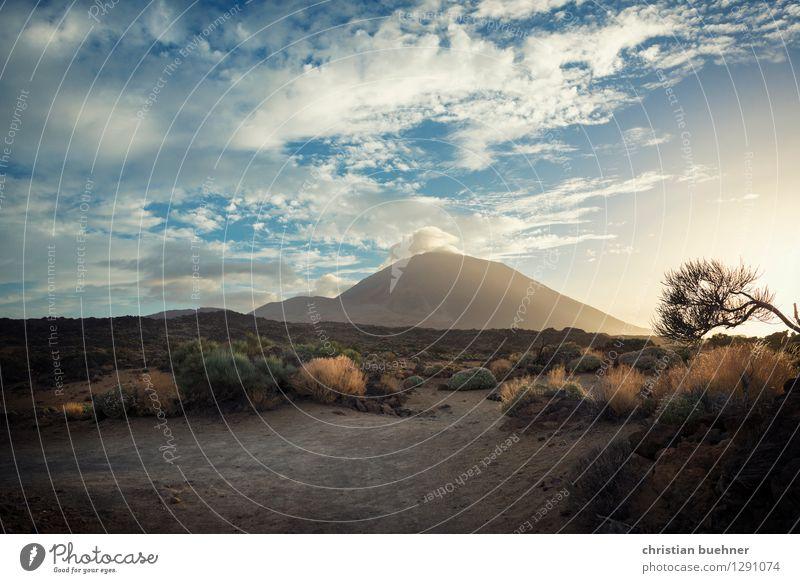 Vulcano island - tenerife Nature Landscape Sky Summer Plant Tree Bushes Rock Volcano Teide Exceptional Power Beautiful Longing Wanderlust Adventure Loneliness