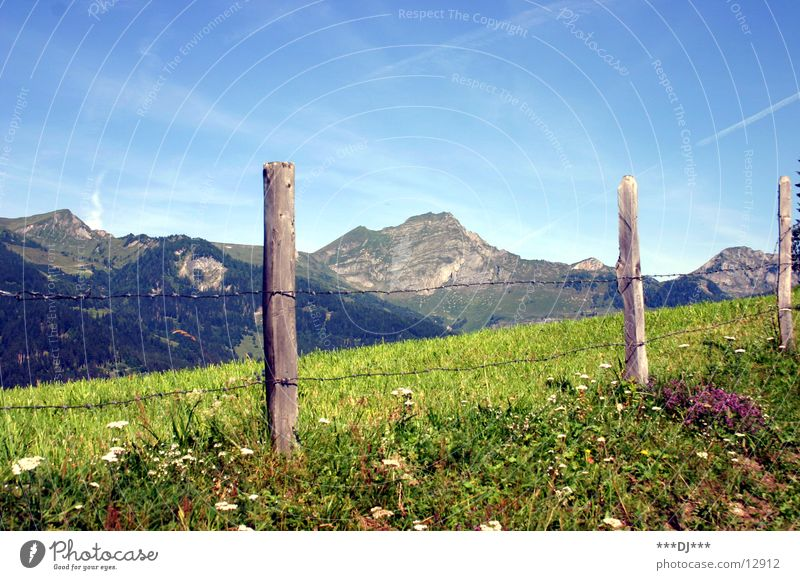 The alp Grass Clouds Summer Fence Juicy Vacation & Travel Beautiful Physics Mountain Sky Sun Pole Blossoming Warmth