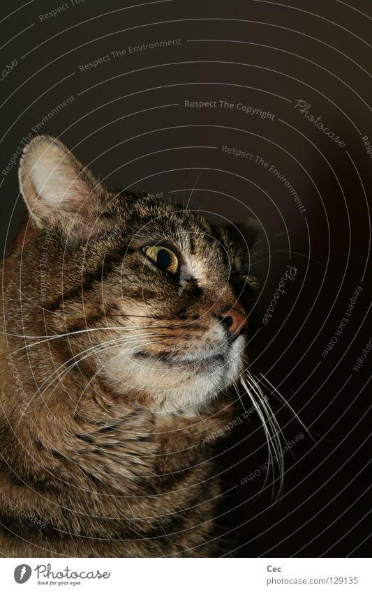Cat Animal Black Far-off places Dark Freedom Dream Brown Wild animal Empty Might Curiosity Pelt Animal face