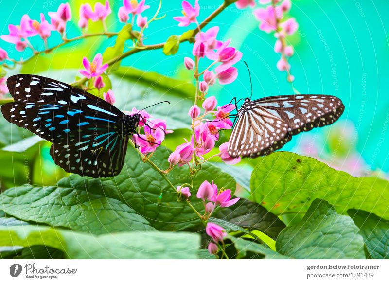 SPRING MESSENGERS Environment Nature Spring Animal Butterfly 2 Flying Sit Green Pink Turquoise Together Life Longing Freedom Joie de vivre (Vitality)