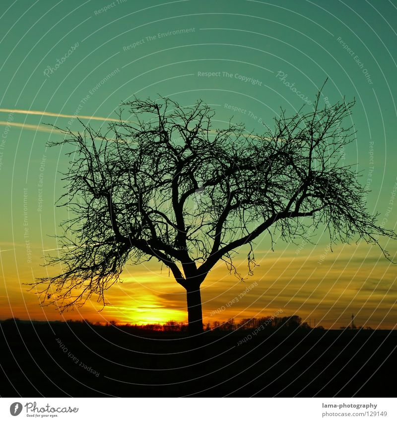 Nature Sky Tree Sun Summer Winter Lamp Life Landscape Graffiti Lighting Background picture Large Growth Romance Branch