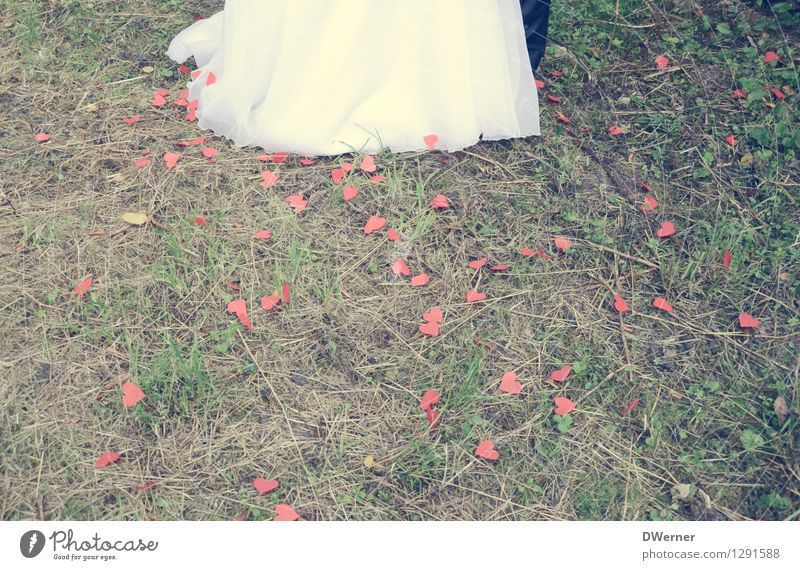 Wedding II Lifestyle Elegant Style Design Happy Masculine Feminine Young woman Youth (Young adults) Young man Couple Legs 2 Human being Beautiful weather Grass