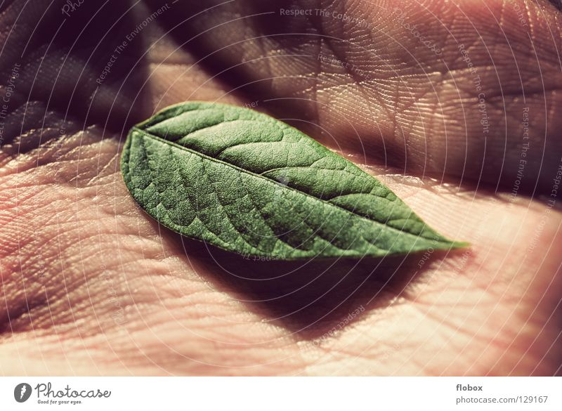 Defenseless II Leaf Environment Environmental protection Green Climate change Ozone Hole in the ozone layer Photosynthesis Hand Fingers Ecological Global Plant
