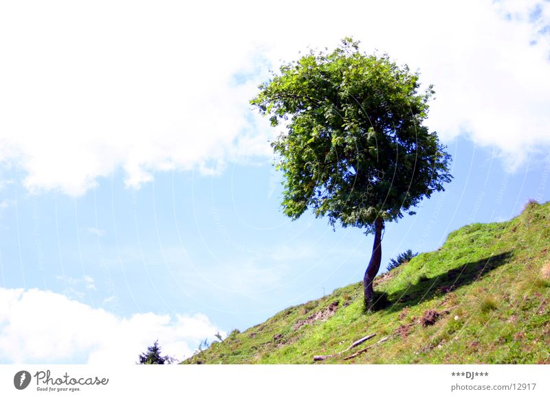Sky Tree Summer Vacation & Travel Clouds Meadow Grass Mountain Weather Tree trunk Incline