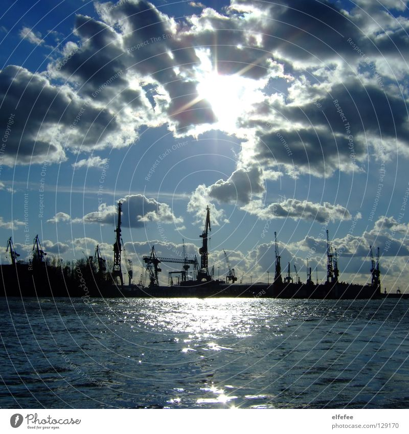 Water Sun Ocean Blue Clouds Bird Glittering Hamburg Harbour Jetty Beautiful weather Seagull Crane Elbe