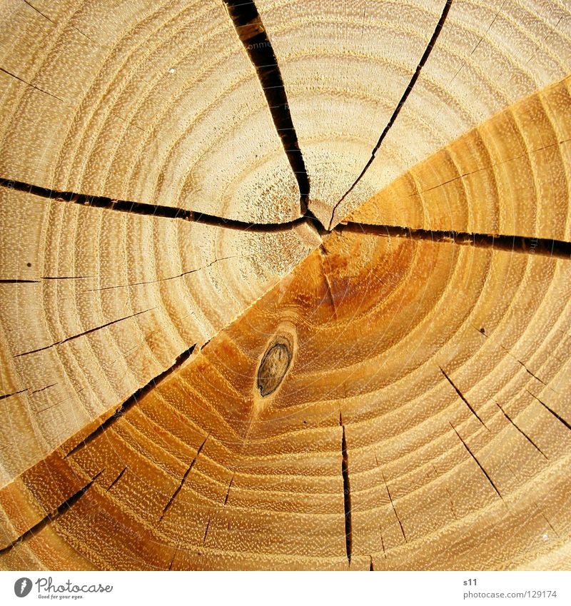wood Wood Tree Tree trunk Round Indecisive Arrangement Cut down Axe Saw Firewood Heat Fallen Brown Light brown Annual ring Earmarked Macro (Extreme close-up)