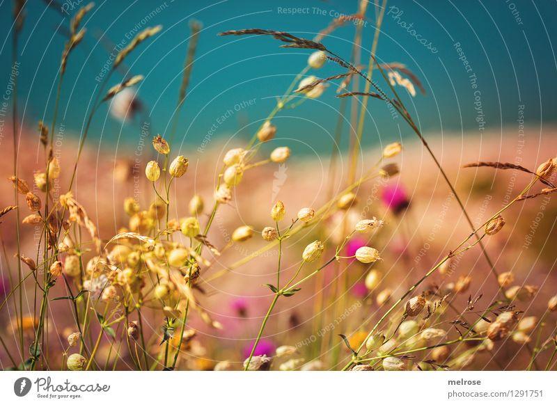 Nature Beautiful Summer Water Relaxation Flower Landscape Calm Blossom Grass Style Lake Dream Contentment Illuminate Elegant