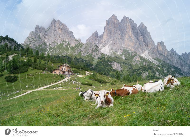 alpine pasture life Vacation & Travel Tourism Adventure Hiking Environment Nature Landscape Sky Clouds Summer Meadow Rock Alps Mountain Dolomites Cadini Group