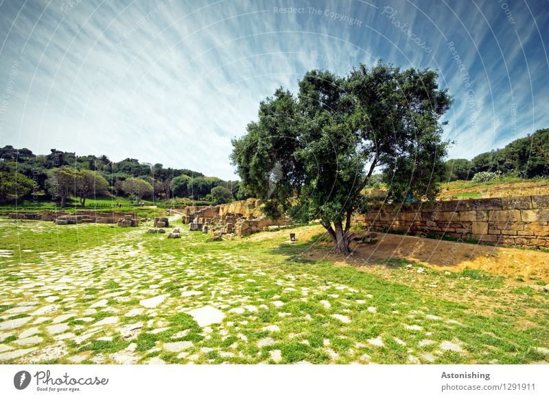 the tree Environment Nature Landscape Plant Sky Clouds Horizon Summer Weather Beautiful weather Tree Grass Bushes Forest Rabat Morocco Ruin Wall (barrier)