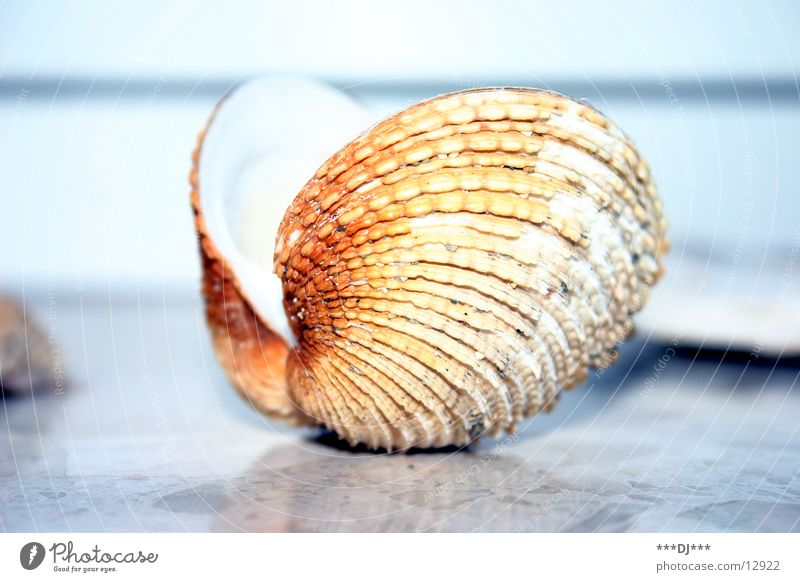 Shell, open up! Mussel Ocean Beach Find Search Pearl Dive Jewellery Australia Water
