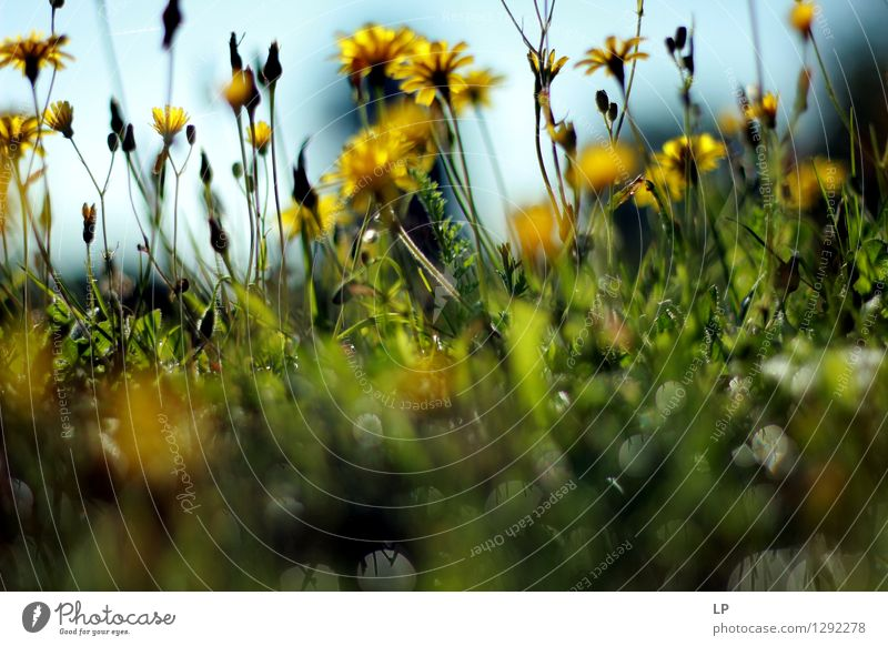 layers Nature Plant Beautiful Flower Landscape Leaf Environment Yellow Blossom Meadow Natural Garden Above Park Field Fresh