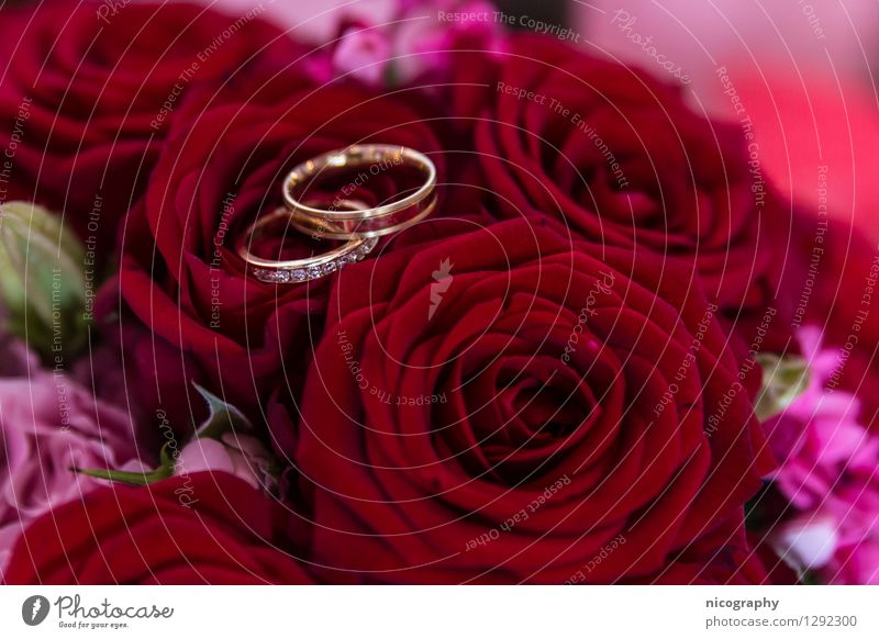 Plant Beautiful Flower Red Love Happy Feasts & Celebrations Art Pink Glittering Happiness Touch Wedding Rose Bouquet Wedding couple