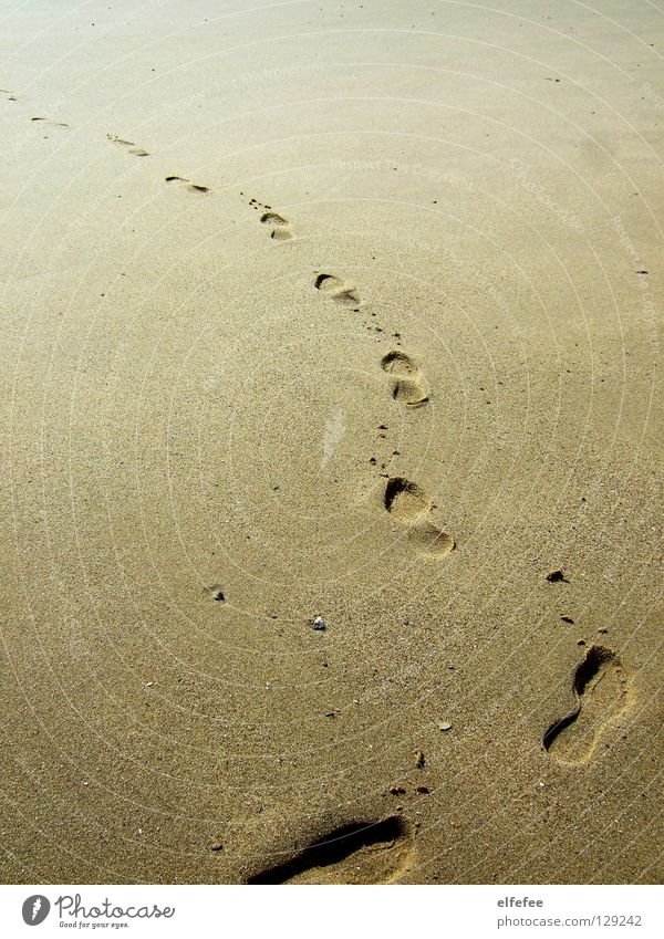 Traces in the sand Tracks Beach Mussel Yellow Grain Grain of sand Loneliness Coast Summer Vacation & Travel Ocean Sand North Sea Stone Feet