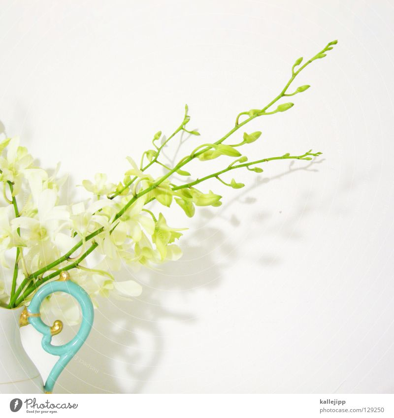 White Plant Flower Colour Blossom Gold Multiple Success Growth Decoration Climbing Living thing Stalk Turquoise Fat Virgin forest