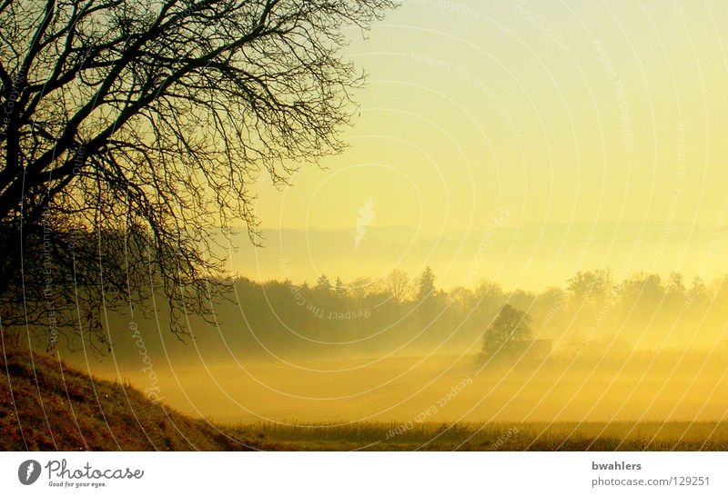Sky Sun Yellow Far-off places Forest Autumn Meadow Landscape Fog Branch Valley Mountain