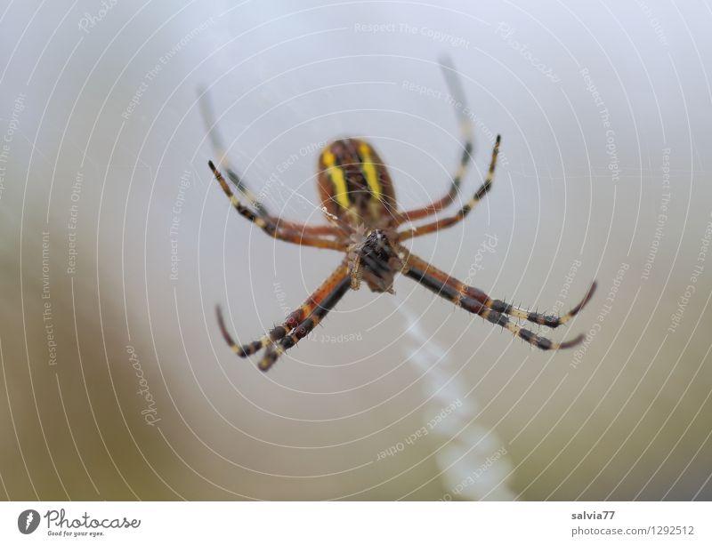 Nature Animal Dark Environment Small Gray Brown Hair Wild animal Wait Observe Claustrophobia Serene Thin Net Watchfulness