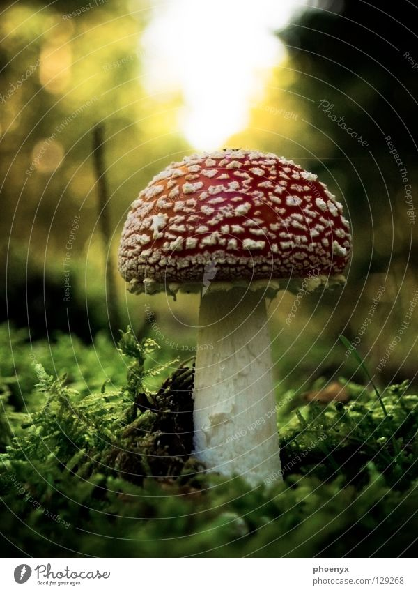 My friend the mushroom Grass Amanita mushroom Red Green Blur Forest Lake Eder Diffuse Macro (Extreme close-up) White Small Poison Delicious Autumn Mushroom