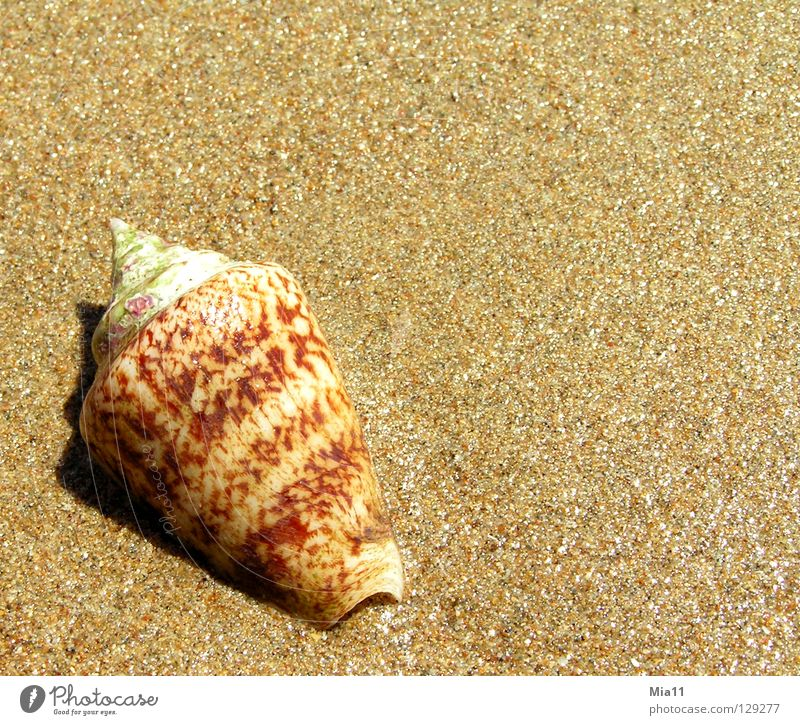Ocean Summer Beach Vacation & Travel Relaxation Sand Coast Mussel Snail Turkey