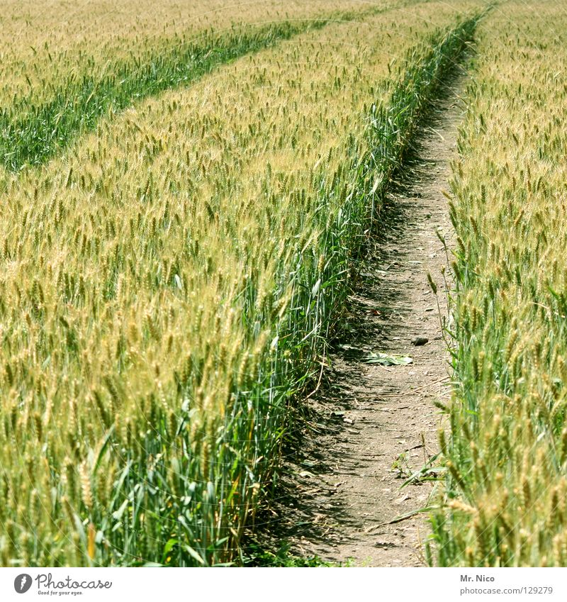 Green Summer Yellow Far-off places Lanes & trails Line Field Dirty Fresh Tracks Agriculture Harvest Deep Footpath Blade of grass Grain