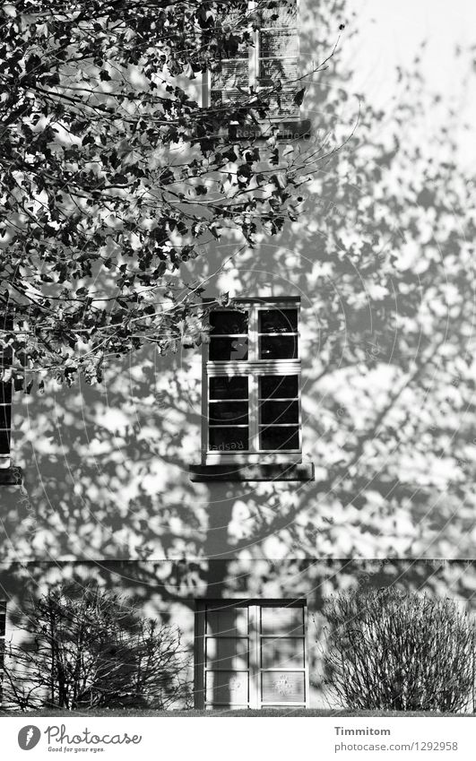 The object is being shadowed. House (Residential Structure) Tree Bushes Heidelberg Wall (barrier) Wall (building) Window Door Esthetic Gray Black White Emotions