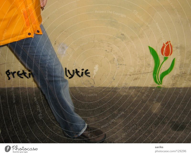 Old Flower Green Red Yellow Wall (building) Spring Gray Legs Graffiti Fresh Europe Jeans Gloomy Blossoming