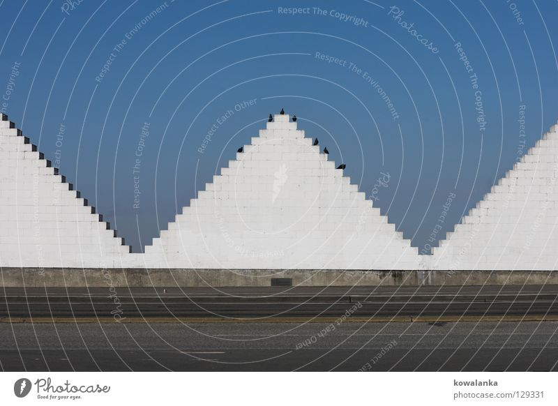 summit Triangle Bird White Geometry Symmetry Meeting Traffic infrastructure Communicate Pyramid Contrast Street Sky Beautiful weather Blue Wait Sit Date Observe