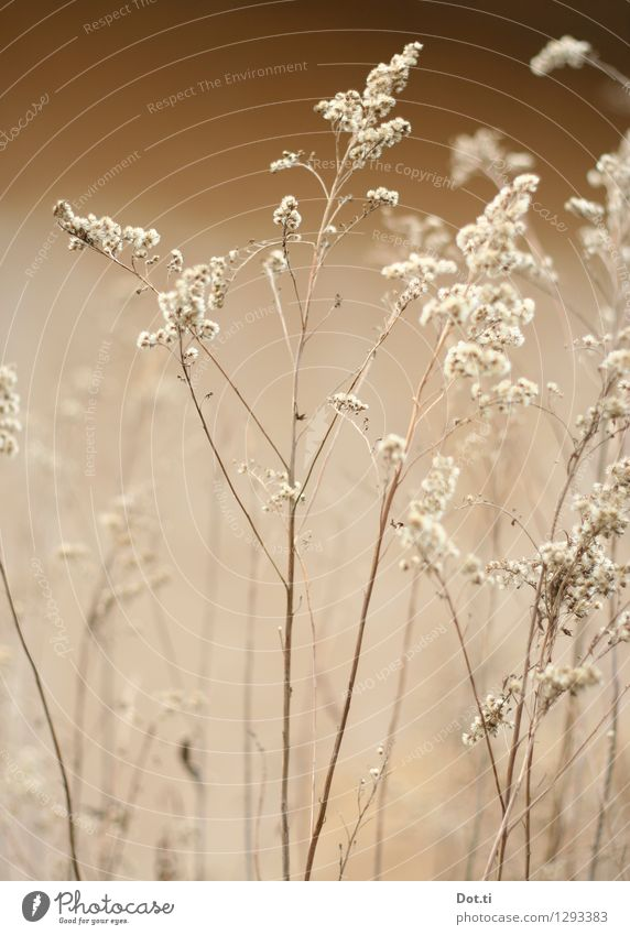 Nature Plant Winter Autumn Transience Delicate Dry Blade of grass Fragile Faded Wild plant Grass blossom