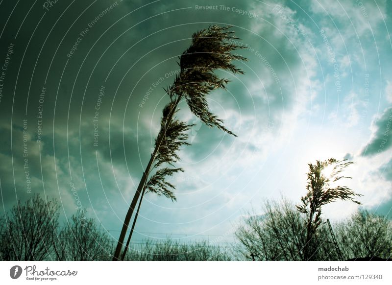 Nature Sky Tree Flower Green Blue Plant Clouds Cold Autumn Grass Rain Air Moody Power
