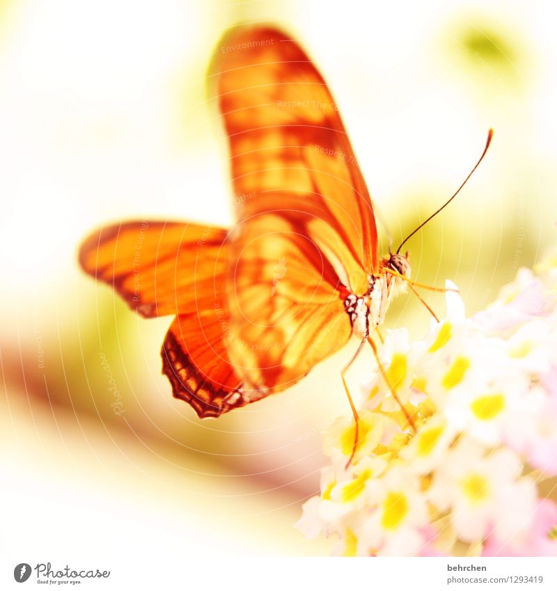 the sun is rising... Nature Plant Animal Spring Summer Flower Leaf Blossom Garden Park Meadow Wild animal Butterfly Wing 1 Blossoming Relaxation Flying To feed