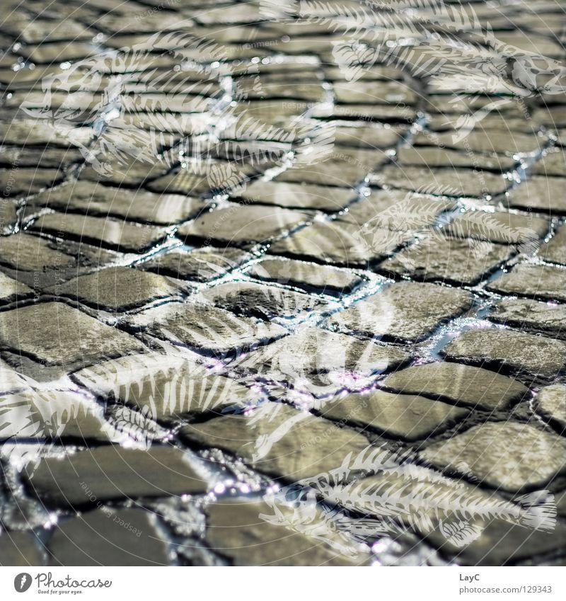 Stone Fish Tracks Traffic infrastructure Fragrance Cobblestones Minerals Demanding Fish bone Malodorous