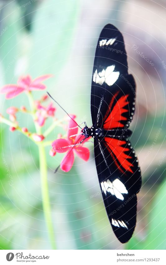 black red...white Nature Plant Animal Spring Summer Flower Leaf Blossom Garden Park Meadow Wild animal Butterfly Wing Blossoming Flying To feed Hang Growth