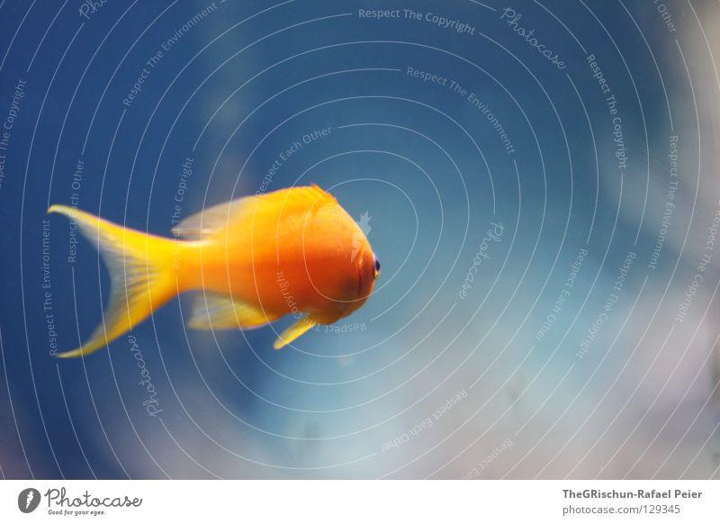 Water Blue Gray Orange Glass Search Fish Munich Zoo Boredom Captured Aquarium Tails Water wings Algae
