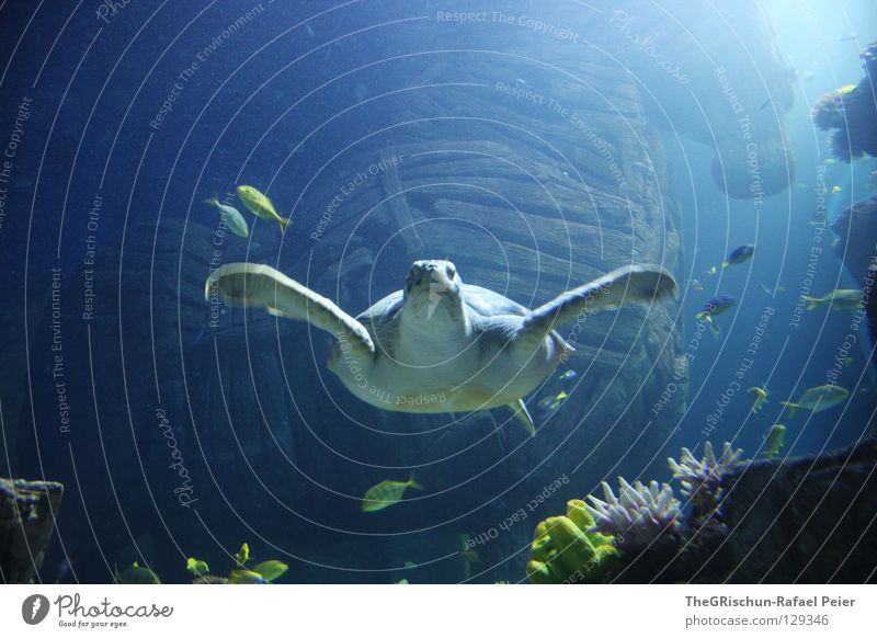 Hey, Dude. Turtle Aquarium Green Captured Sealife Munich Wood Blue Water wings trojan horse Troy Plant Glass Underwater photo Swimming & Bathing