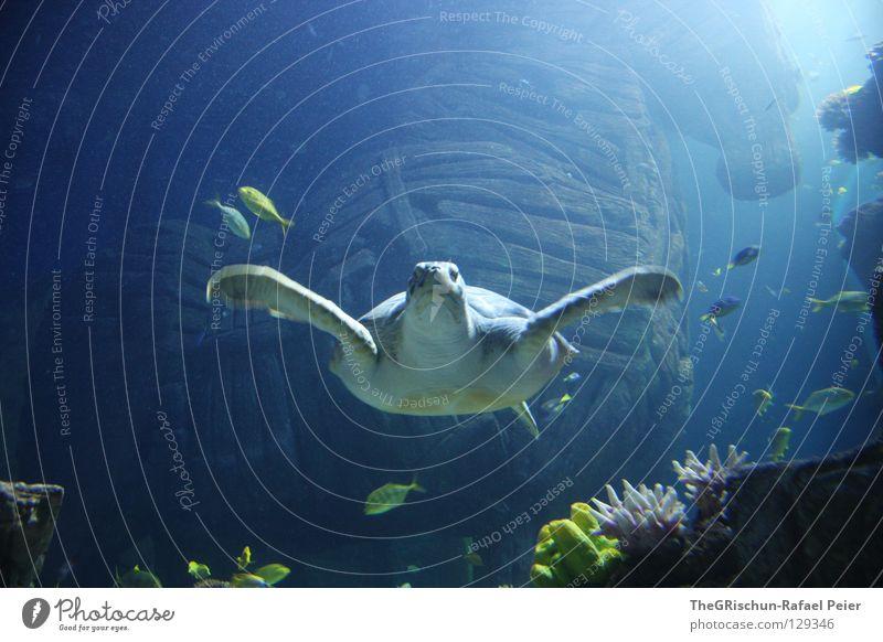 Underwater photo Blue Green Plant Wood Glass Swimming & Bathing Munich Captured Aquarium Water wings Animal Turtle Sealife