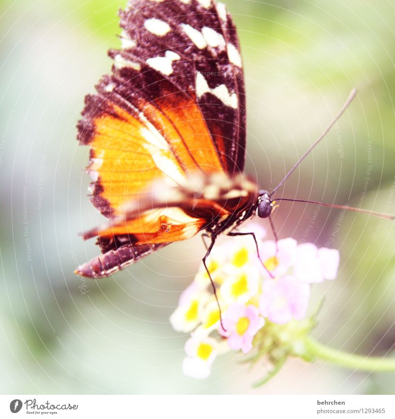 fluttering imprisonment Nature Plant Animal Flower Blossom Garden Park Meadow Wild animal Butterfly Wing 1 Observe Blossoming Fragrance Flying To feed