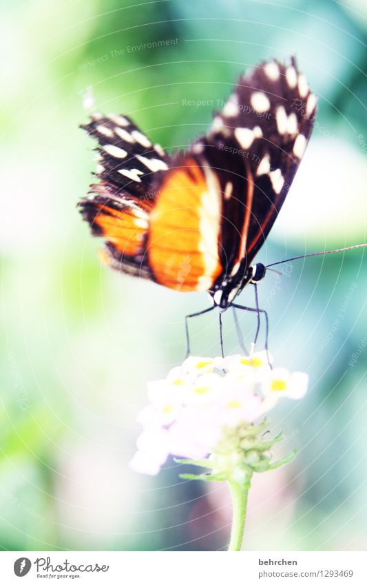 lift-off Nature Plant Animal Spring Summer Flower Leaf Blossom Garden Park Meadow Wild animal Butterfly Wing 1 Observe Movement Flying Sit Exceptional Exotic