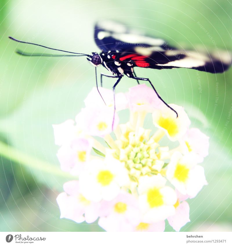 hell(g)strong Nature Plant Animal Spring Summer Beautiful weather Flower Leaf Blossom Garden Park Meadow Wild animal Butterfly Animal face Wing Compound eye 1