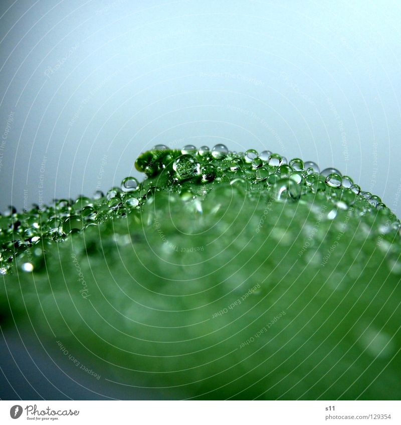 WaterPerls Drops of water Wet Hydrophobic Green Plant Glittering Fluid Beautiful Transience Macro (Extreme close-up) Close-up Power Force Sphere Rain Inject