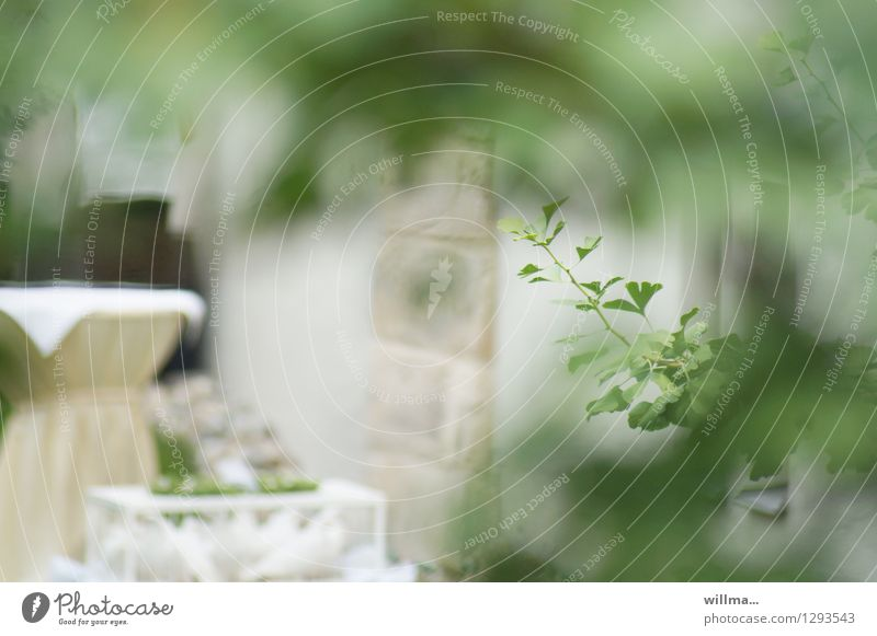 0815 AST | hidden menu Entertainment Event Feasts & Celebrations Wedding Twig Bright Hide Voyeurism Festive Pigeon Colour photo Exterior shot Deserted Day Blur