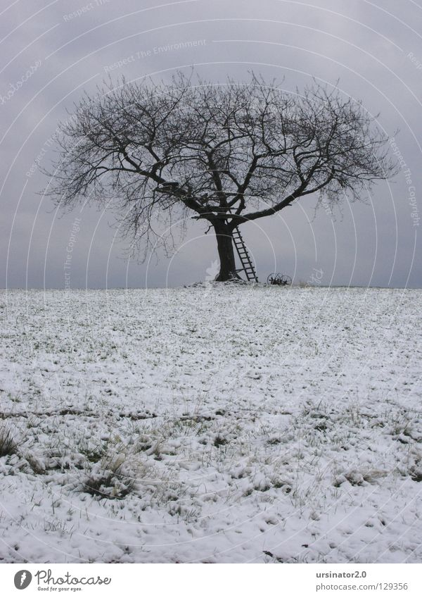 The tree 4 Tree Field Meadow Sky Clouds Ladder Winter Snow Land Feature Horizon Nature Agriculture Loneliness Cold Grief White Gray Blue farming equipment