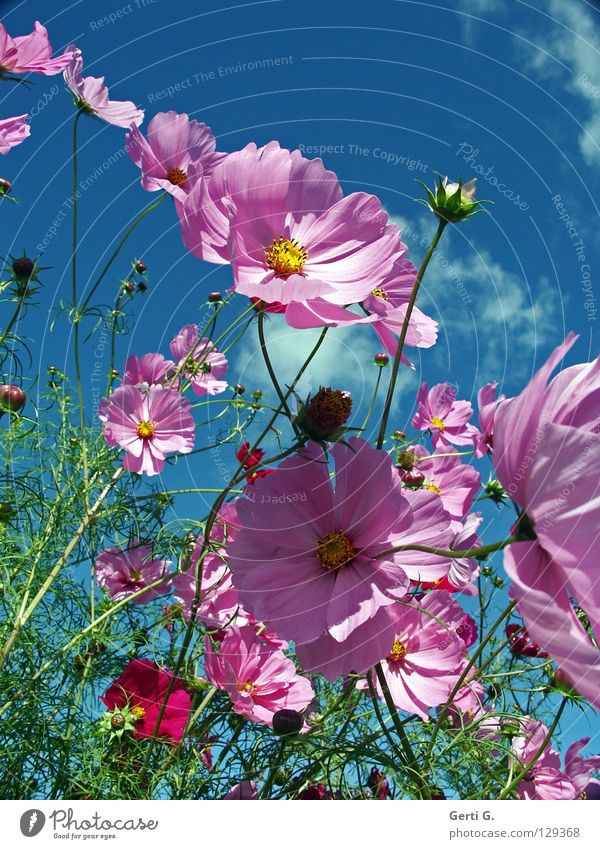 Beautiful Sky Flower Green Blue Plant Summer Joy Clouds Yellow Autumn Emotions Blossom Movement Spring Happy