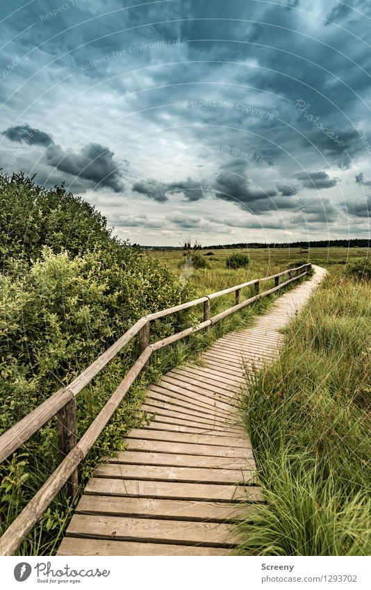 Sky Nature Vacation & Travel Blue Plant Green Summer Tree Landscape Calm Clouds Lanes & trails Grass Brown Tourism Idyll