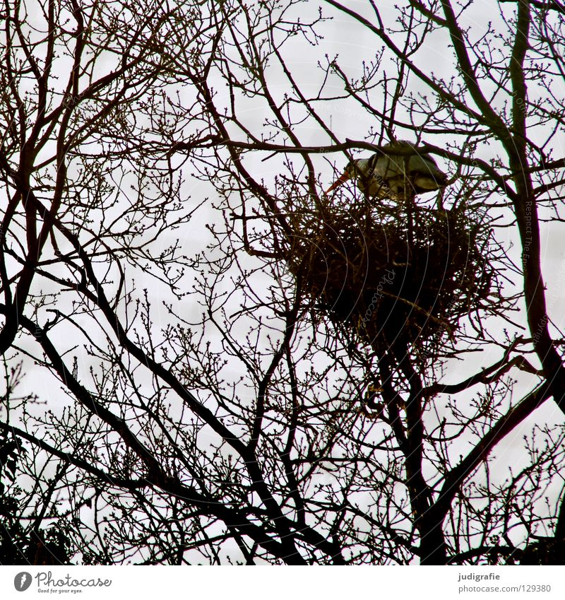 High Top Tree Nest Bird Heron Grey heron Branchage Muddled Bird's eggs Parental care Safety Plant Animal Environment Egg House (Residential Structure) Nature