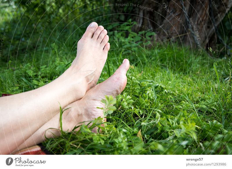 Human being Woman Nature Naked Green Relaxation Calm Adults Natural Feminine Legs Brown Feet Pink Lie 45 - 60 years