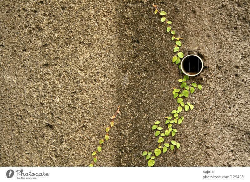 Old Green Plant Black Wall (building) Gray Stone Wall (barrier) Dirty Pipe Hollow Drainage Striped Foliage plant Creeper Drainpipe