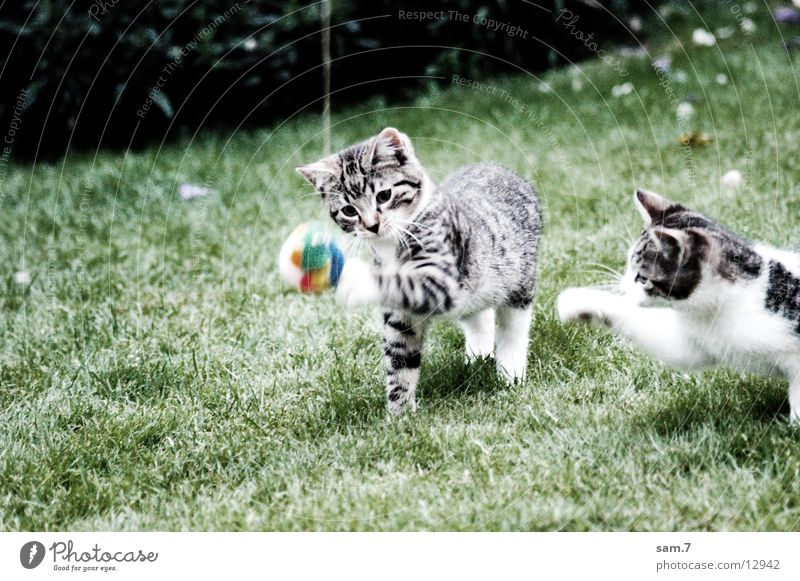 Jump Playing Cat Sweet Ball Cute